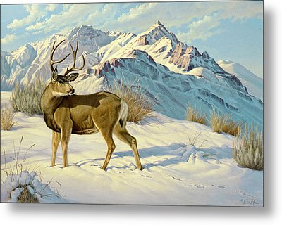 High Country Buck Metal Print by Paul Krapf