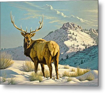High Country Bull Metal Print