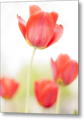 High Key Tulips Metal Print by Adam Romanowicz