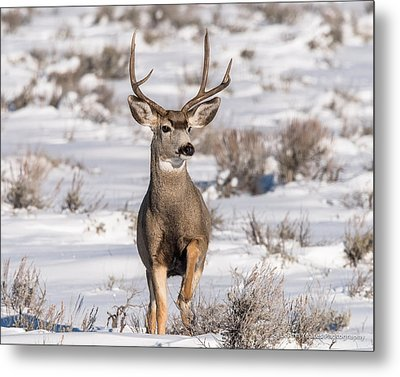 High Stepping At Dawn Metal Print by Yeates Photography