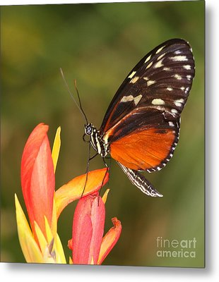 High Upon A Flower Metal Print by Ruth Jolly