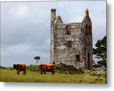Highland Cattle And Ruined Tin Mine  Metal Print by James Brunker