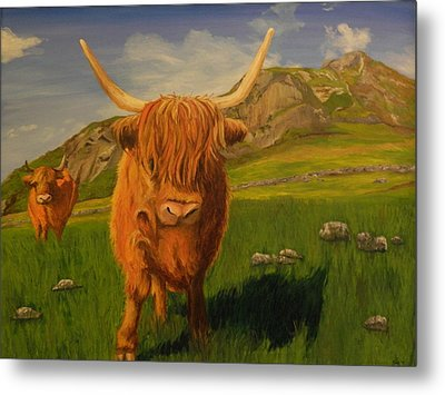 Highland Coos Metal Print by Kelly Bossidy