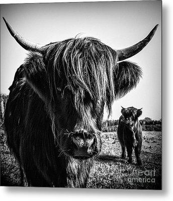 Highlander 1 Metal Print by Janet Burdon