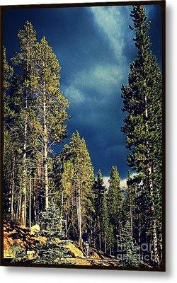 Hike In The Woods Metal Print by Garren Zanker