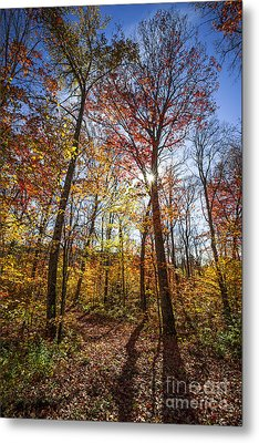 Hiking Trail In Sunny Fall Forest Metal Print