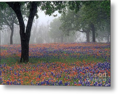 Hill Country - Fs000912 Metal Print