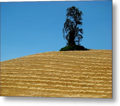 Metal Print featuring the photograph Hillside Protector by Paul Foutz