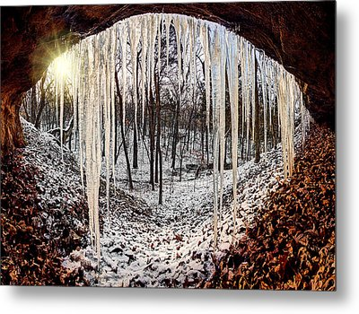 Hinding From Winter Metal Print by Robert Charity