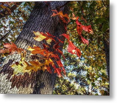 Hints Of Fall Metal Print by Linda Unger