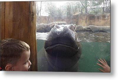 Hippo Time Metal Print by Don Koester