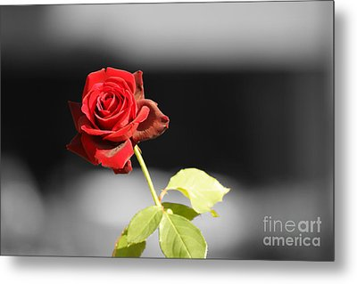 Metal Print featuring the photograph Hiroshima Rose by Cassandra Buckley