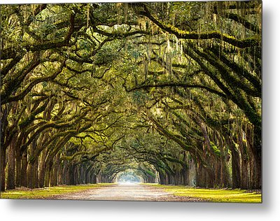 Historic Wormsloe Plantation Oak Trees Metal Print