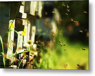 Hives And Bees Metal Print