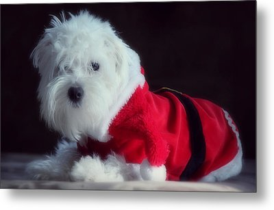 Ho Ho Ho Merry Christmas Metal Print by Melanie Lankford Photography