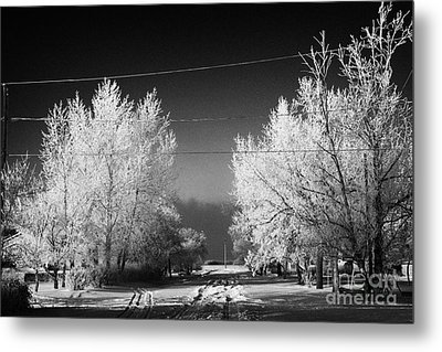 hoar frost covered trees on street in small rural village of Forget Saskatchewan Canada Metal Print