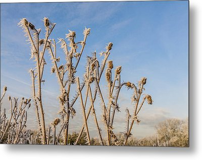 Metal Print featuring the photograph Hoar Frost by David Isaacson