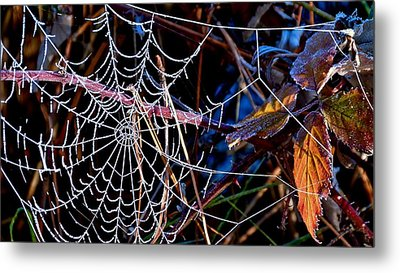 Metal Print featuring the photograph Hoary Web by Julia Hassett