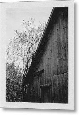 Hog Pen Metal Print by Brady D Hebert