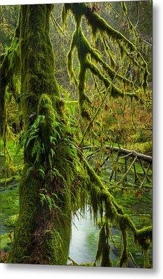 Hoh Rainforest 2 Metal Print