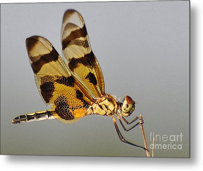 Holding On Tightly Metal Print by Kathy Baccari