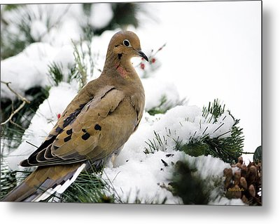 Holiday Dove Metal Print by Christina Rollo