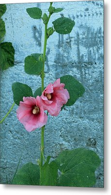 Metal Print featuring the photograph Hollyhock by E Faithe Lester