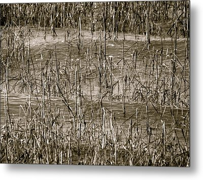 Home For Wildlife Metal Print by Q's House of Art ArtandFinePhotography