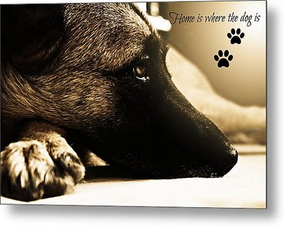 Home Is Where The Dog Is Metal Print by Clare Bevan