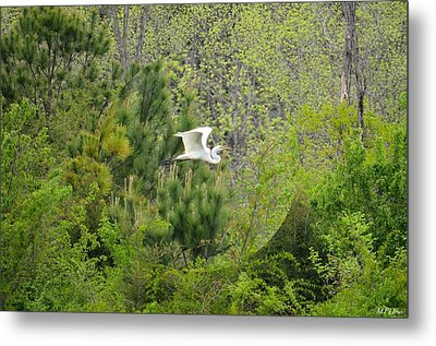 Home Of The Free Metal Print by Maria Urso