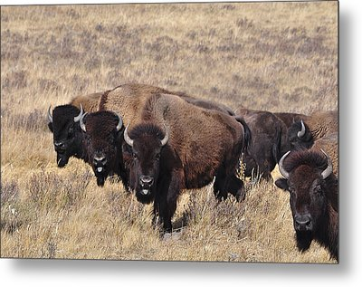 Metal Print featuring the photograph Home On The Range by Fran Riley