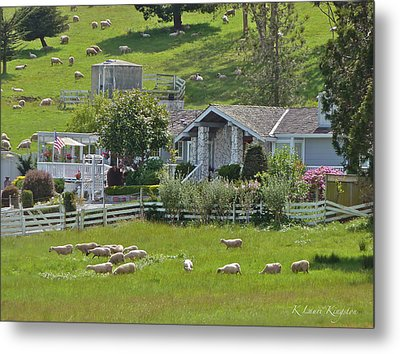 Home Sheep Home Metal Print by K L Kingston