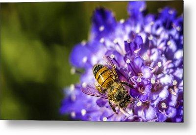 Honey Bee Metal Print by Caitlyn  Grasso