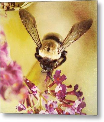Honey Bee Metal Print by Kim Fearheiley