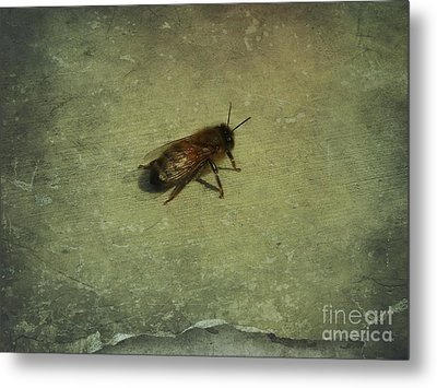 Metal Print featuring the photograph Honey Bee by Kristine Nora