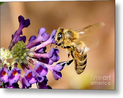 Honey Bee On Butterfly Bush Metal Print by Jean A Chang
