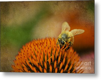 Honey Bee On Flower Metal Print by Dan Friend