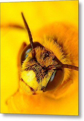 Honey Bee Yellow Metal Print by Chris Fraser