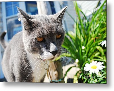 Honey Eyes Metal Print by Susan Hernandez