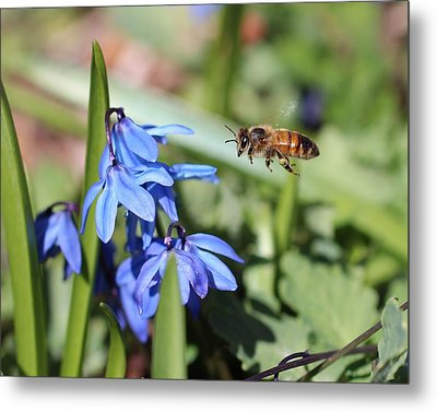 Honeybee In Flight Metal Print