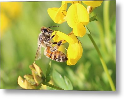honeybee on Birdsfool Trefoil Metal Print