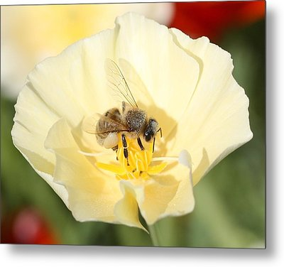 Honeybee On Cream Poppy Metal Print