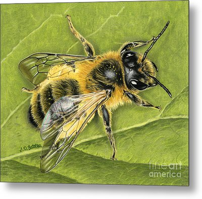 Honeybee On Leaf Metal Print by Sarah Batalka