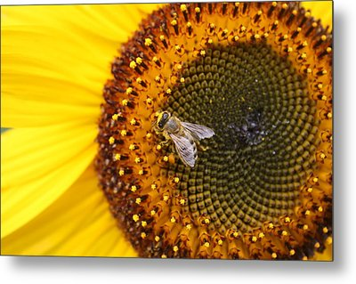 Honeybee On Sunflower Metal Print