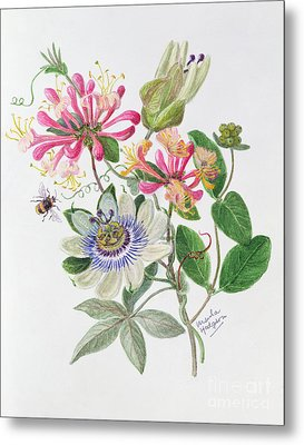 Honeysuckle And Passion Flower  Metal Print