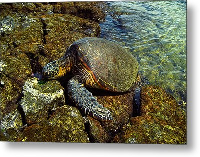 Metal Print featuring the photograph Honu by Randy Sylvia