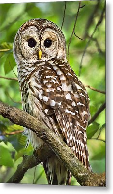 Metal Print featuring the photograph Hoot Owl by Christina Rollo