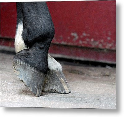 Hooves Metal Print by Lisa Phillips