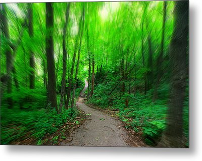 Hopkins Path Metal Print