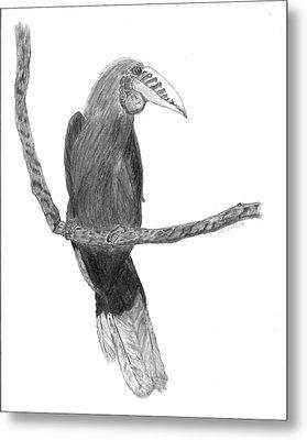 Hornbill Harry Metal Print by D Sharelle